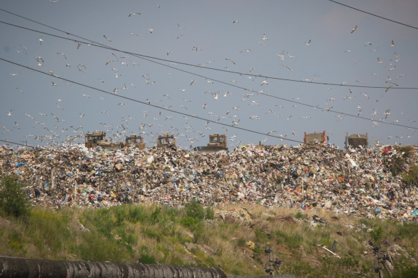 На месте 40-метровых гор мусора министр экологии предложил высадить деревья и построить развлекательный центр