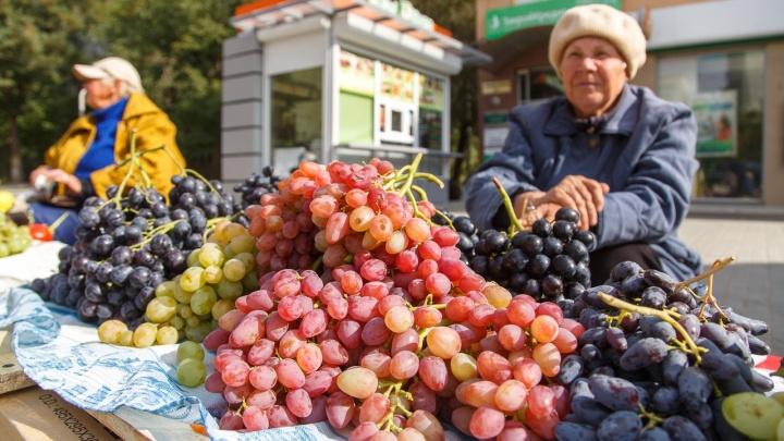 Сезон ярмарок открыт: где в Волгограде купить продукты местного производства подешевле