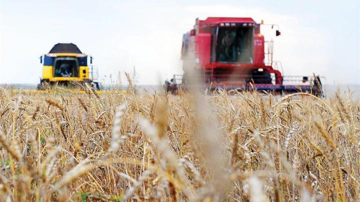 Хорошие вести с полей: в Самарской области собрали более миллиона тонн зерна