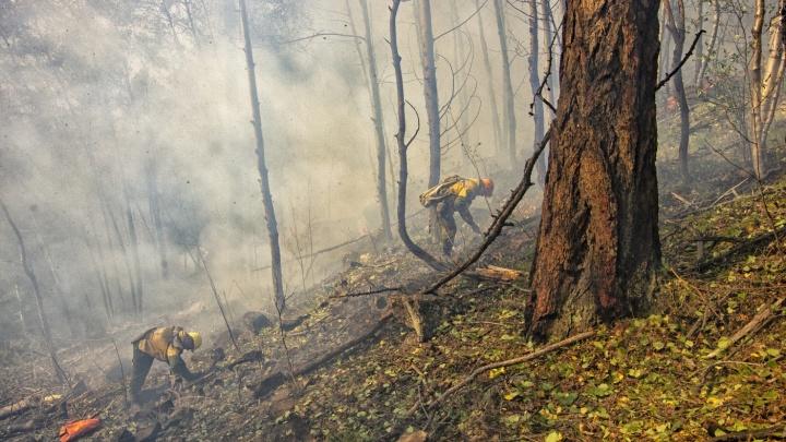 «Радикального перелома нет»: в «Гринпис» назвали недостаточными усилия по борьбе с огнем в лесах