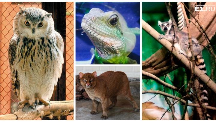 Адель или Дорофея: екатеринбургский зоопарк начал выборы «Зоомисс-2018»