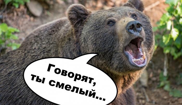 Лучшее за год: Подставь бочок — есть ли у вас шансы победить медведя