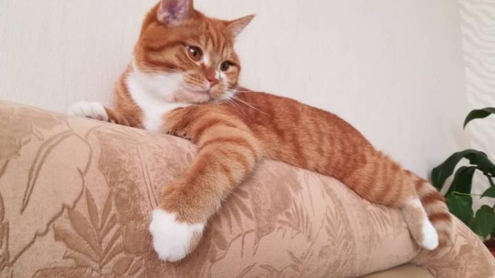 Ударная доза милоты: любуемся роскошными фото котиков