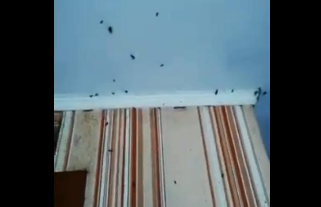 «Все повылазили»: шокирующее видео с сотнями тараканов в красноярской квартире