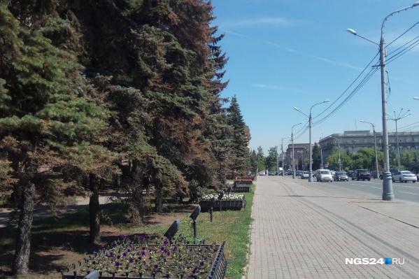 Причиной усыхания деревьев назвали пыль и плохую погоду