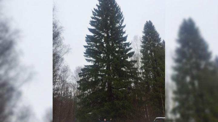 Главная елка Октябрьского района Уфы застряла в лесу из-за бездорожья