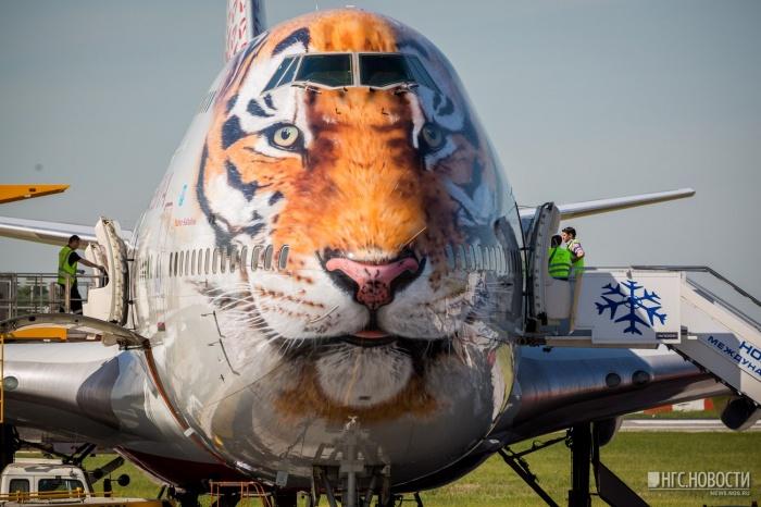 Прилетевший из Сочи Boeing 747-400 в аэропорту Толмачёво днем 5 июня