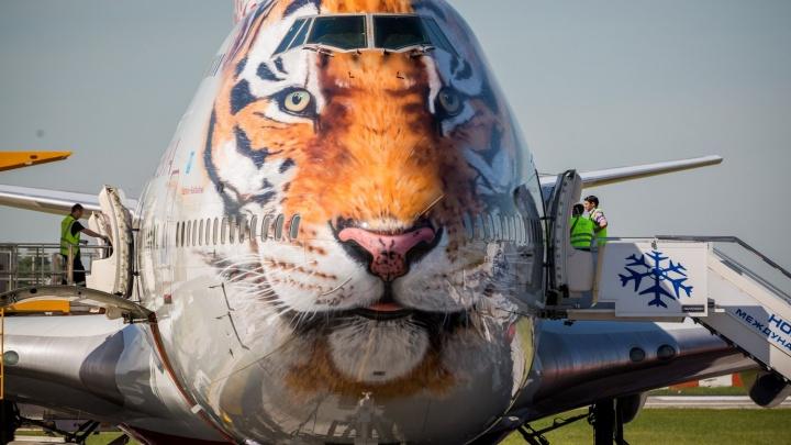 В Новосибирск прилетел первый двухпалубный «тигролёт» из Сочи