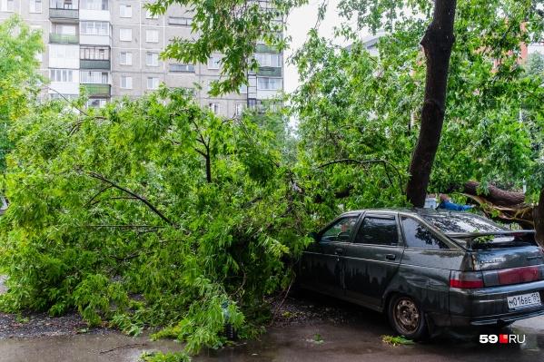 Автомобили под деревьями лучше тоже не парковать