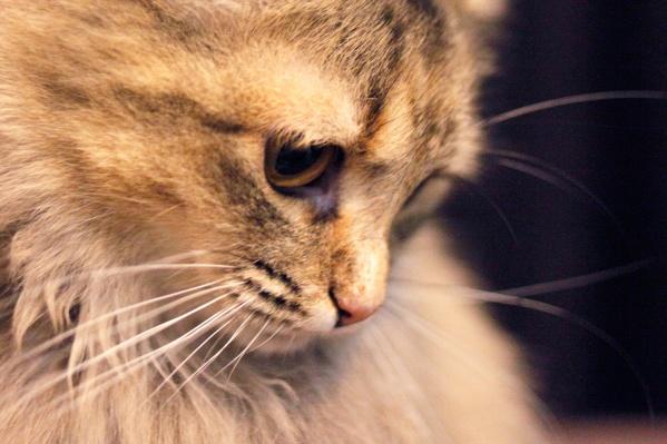 Бешенством чаще болеют дикие животные, но без прививок и домашние рискуют заразиться