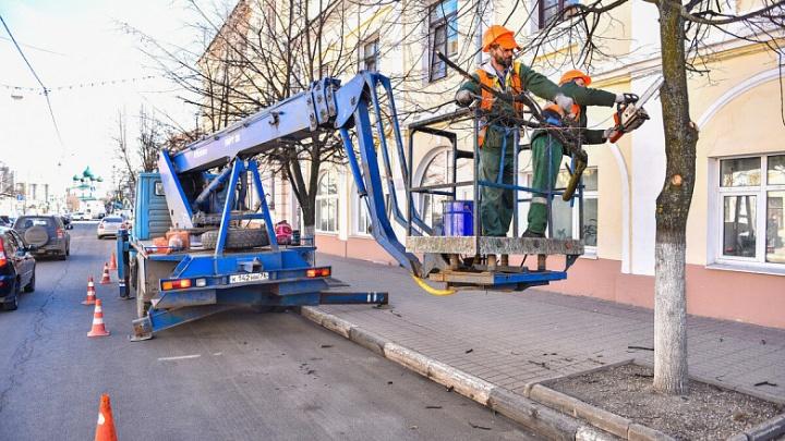 В центре Ярославля обрезают деревья: специалисты объяснили, зачем это нужно