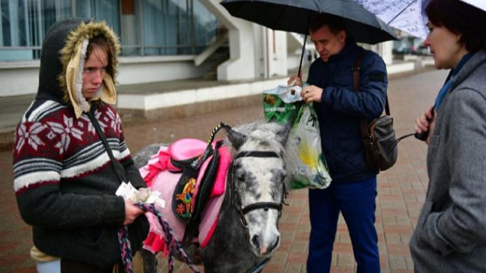 У ярославских лошадей проверили паспорта. И нашли нелегалов