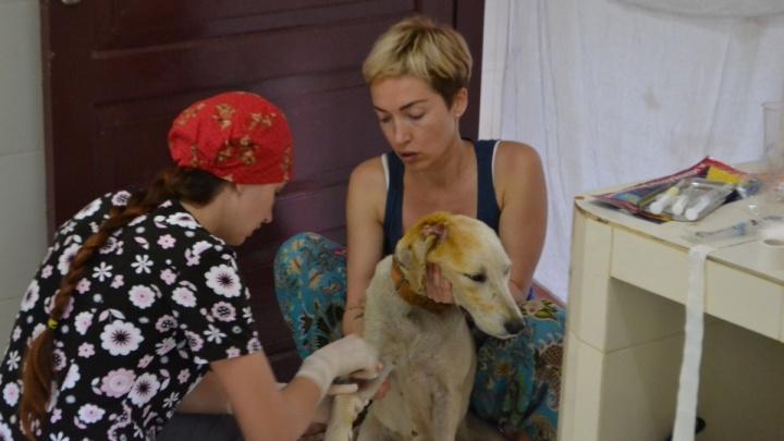 «В нас кидались кокосами»: сибирячка спасла в Индии 400 собак