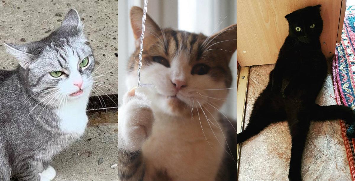 Осуждение, недоумение и хитрость: 10 самых эмоциональных котов Нижнего Новгорода