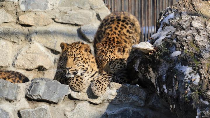 Новосибирский зоопарк начал продавать билеты в интернете