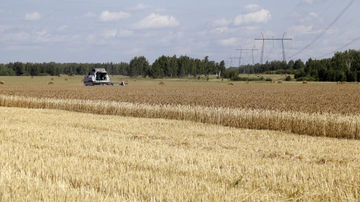 Зауральские аграрии собрали больше миллиона тонн зерна