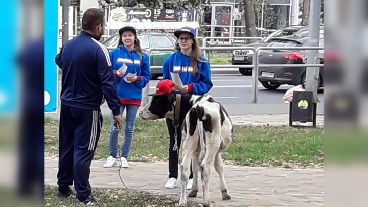 Живая реклама: на открытие магазина с продукцией из говядины в Самаре притащили теленка