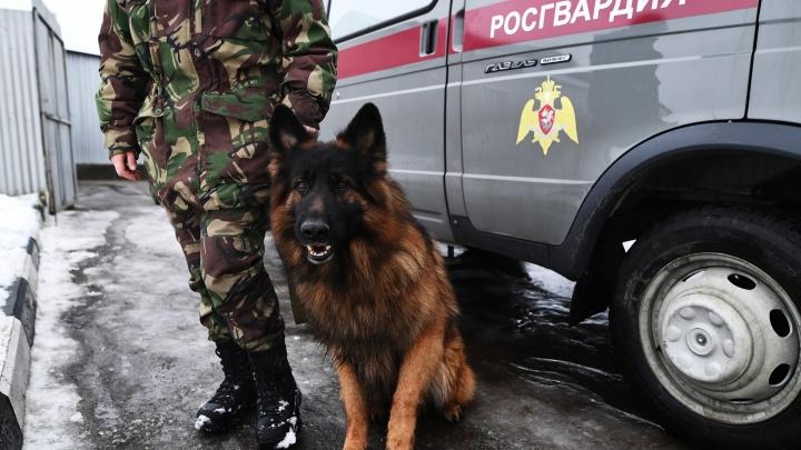 Засидевшийся в сауне новосибирец попытался пнуть сотрудника Росгвардии и получил срок