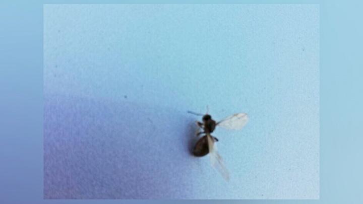Тюменцы заметили нашествие странных летающих насекомых. Они опасны для людей?