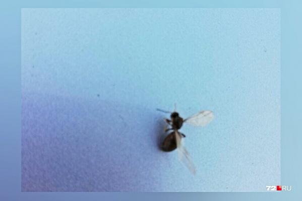 Крылья у самок муравьев отрастают лишь одни раз в жизни — за два-три дня до начала брачного периода. После спаривания крылья отпадают, лишая насекомых возможности летать