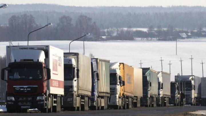 19 тонн абрикосов из Бишкека не доехали до Екатеринбурга: груз задержали в Зауралье