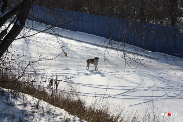 Между зоозащитниками и организацией по отлову собак произошёл конфликт по поводу бездомных животных