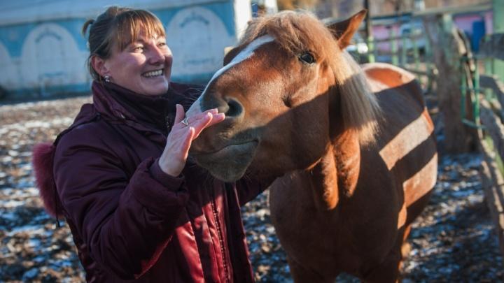 Кататься на конях в Уфе разрешили только в определенных местах