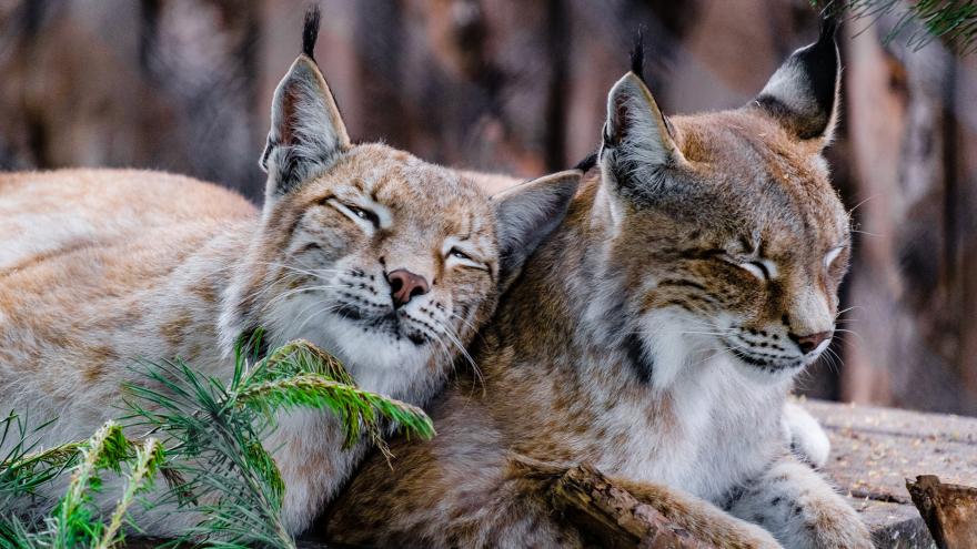 Плохой аппетит и дремота: как ведут себя животные в Пермском зоопарке в непогожие дни. Фоторепортаж