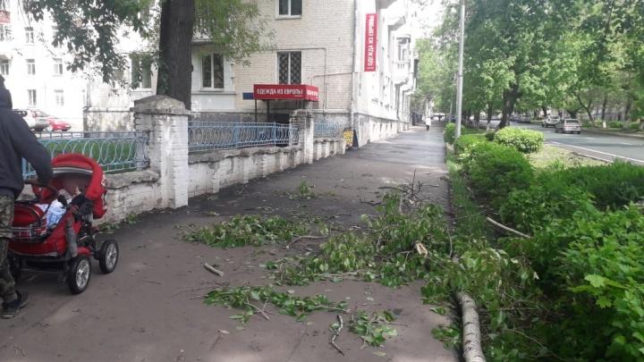 «В глазах потемнело, поняла, что уже лежу»: на уфимку рухнула огромная ветка дерева
