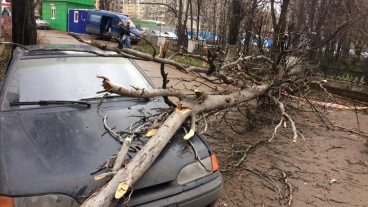 От ветра в уфимском дворе на автомобиль обрушилось дерево