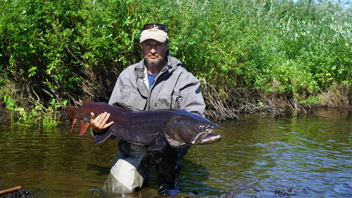 Рыбаки показали снимки огромных рыб весом в десятки килограммов из рек плато Путорана