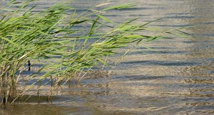 В Курганской области в реке Исети рыбаки нашли труп женщины