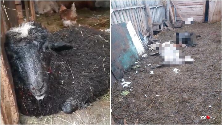 В Зареке стая собак загрызла десяток домашних животных