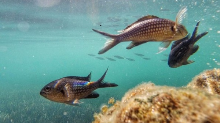 В Башкирии за сутки утонули два рыбака