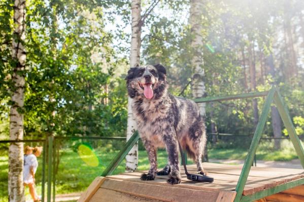 Кроша испытала три собачьи площадки