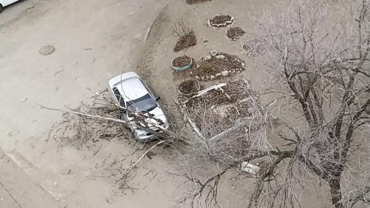 На севере Волгограда сухое дерево раздавило легковушку