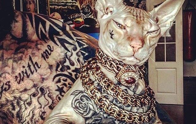 «Ты че с котом сделал? Свое тело уродуй!»: читатели E1.RU — о потерявшемся сфинксе с татуировками