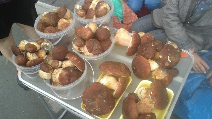 Первые пошли: на уличных прилавках города начали продавать белые грибы