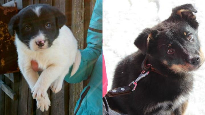 Их выбросили на улицу: 7 собак и 10 щенков ищут новый дом