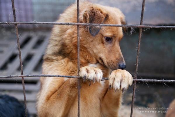 Приюты переполнены, и найти хорошего хозяина для животных порой очень сложно
