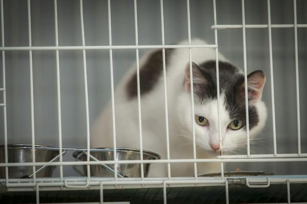 Контракт по отлову бездомных животных заканчивается сегодня