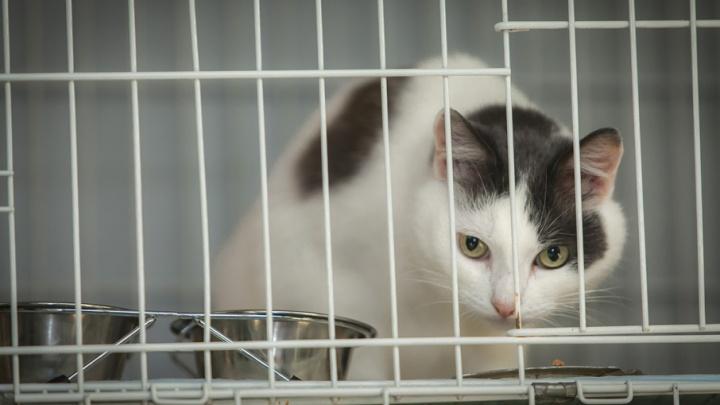 «Тоже люблю животных»: Тефтелев заступился за кошек и собак, которых содержат в «Горэкоцентре»