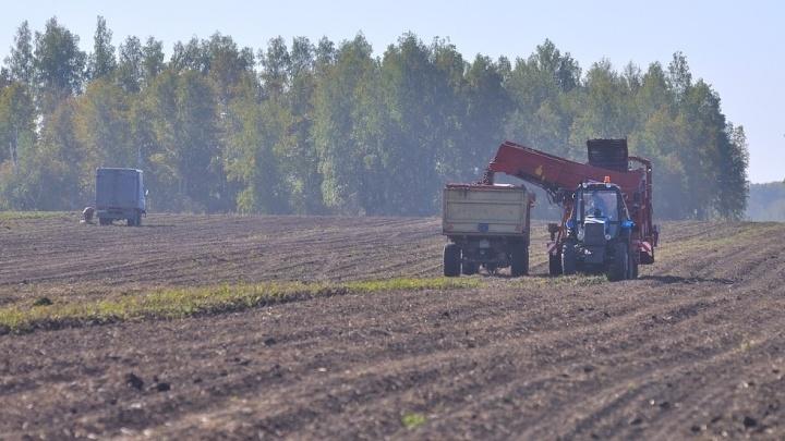 Судебные приставы взыскали с уральского фермера 50 тысяч за разросшийся на его земле бурьян