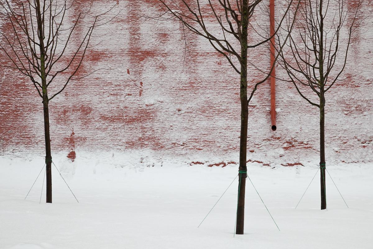 Из серии «Озеленение», Александровский сад в Москве, 2013 год