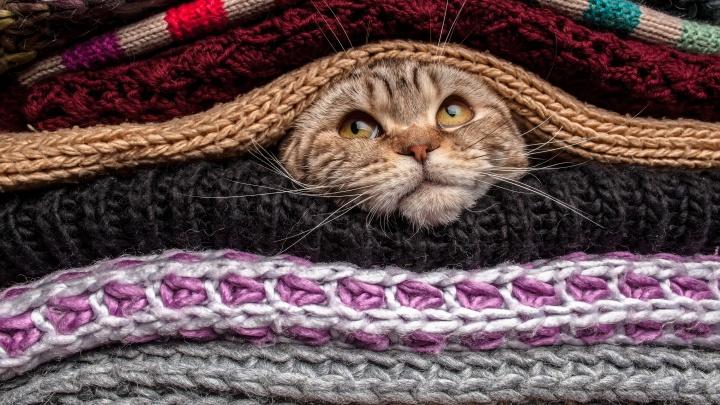 Уютная осень: как экономно обновить интерьер и гардероб под стать сезону