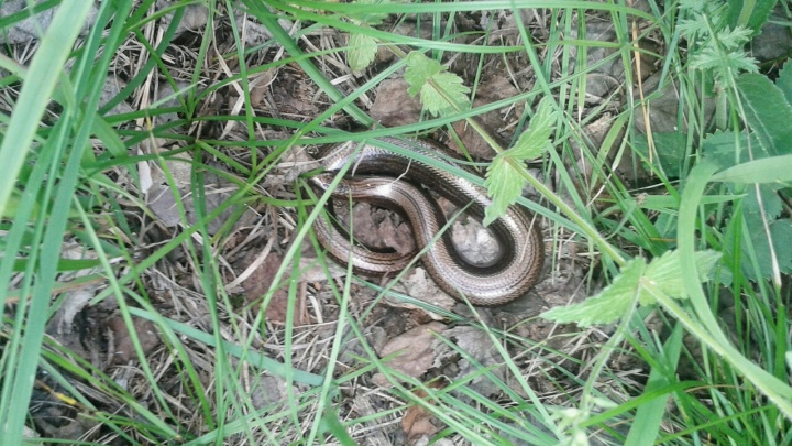 Устрашающее соседство: в Башкирии расплодились змеи