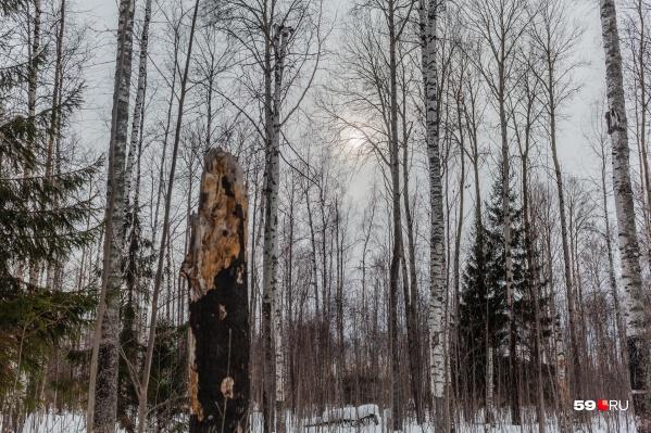 Тело обнаружили в лесу