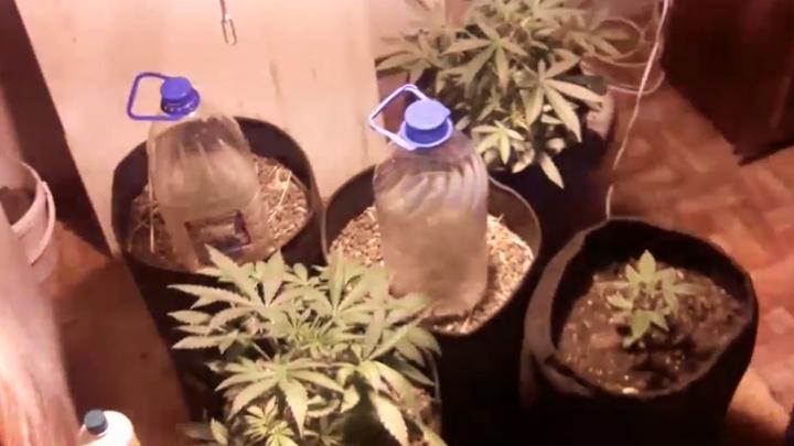 Марихуаны купить в екатеринбурге в штате разрешили марихуану