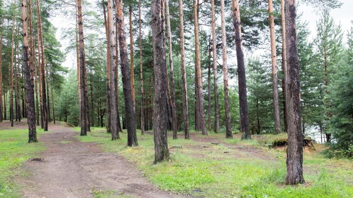 В Ярославской области владельца лесного участка оштрафовали на 50 тысяч рублей за столб