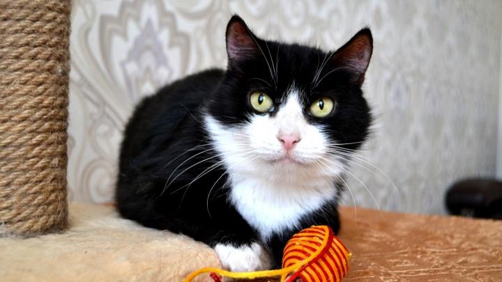 Новосибирцы пришли на выставку за тремя десятками котиков с тяжёлой судьбой